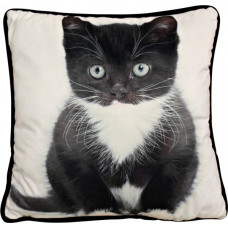 Sassy Kitten Cushion