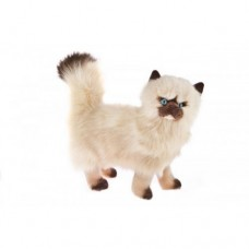 Himalayan Plush Cat