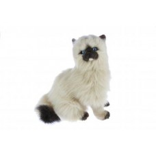 Himalayan Plush Cat Sitting