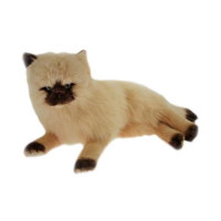 Himalayan Plush Cat Lying Down